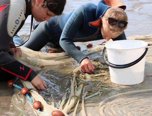 Écologie marine en Mer Baltique : une expérience de terrain pour comparer les impacts des poissons natifs et non-natifs
