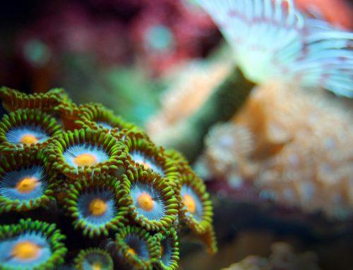 La biodiversité marine