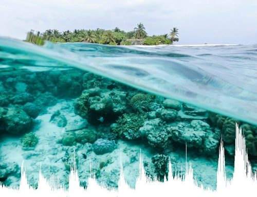 Les habitats marins