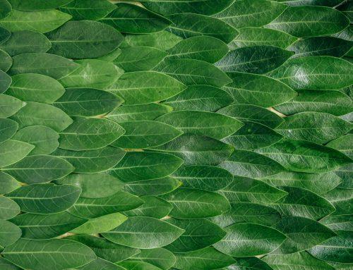 Faire le point sur son impact sur l'environnement : calculer son empreinte écologique