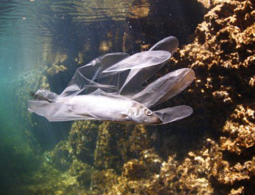 Menaces pour les écosystèmes marins