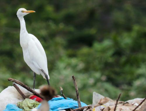 Comment arriver à passer à l'action afin de préserver l'environnement ?