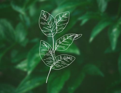 Comment approfondir ta connexion à la nature ?
